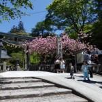 榛名神社とわらび餅